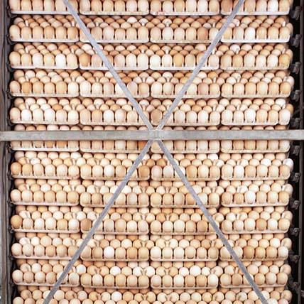 arf-agriculture2-body-image.jpg